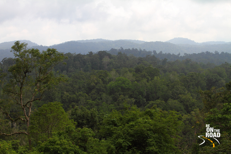 The dense Vazhachal Forests