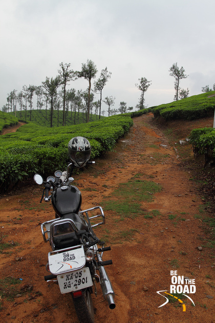 Climbing the steep paths through tea estates