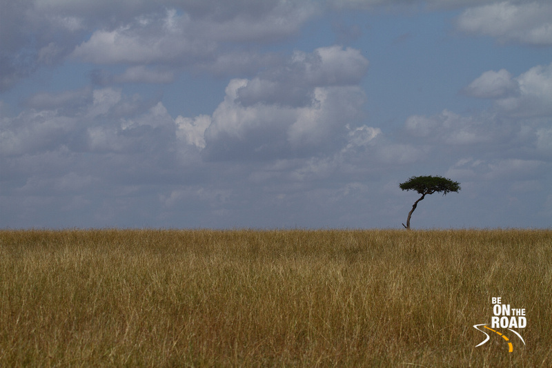 The beautiful landscape of Maasai Mara; the sprawling savaanah and the rare yellow fever tree