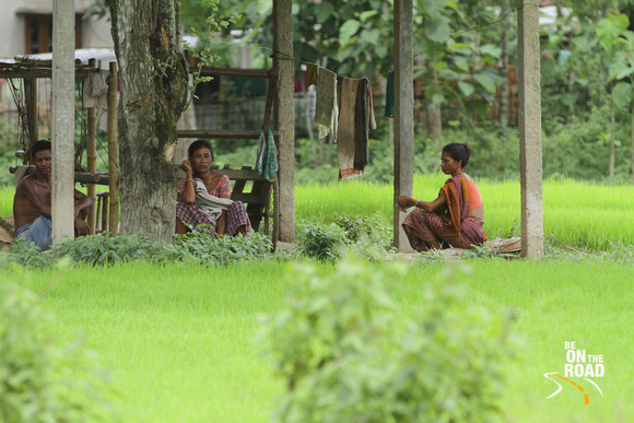 People of mishing tribe at Panbari, Assam and fresh green paddy