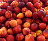 Sweet Nectarines - Delicious fruits of Australia