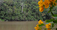 Barron River and the Rainforests at Kuranda, Queensland
